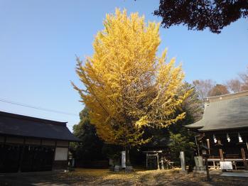 本堂の横には黄葉に染まった大きな樹が。