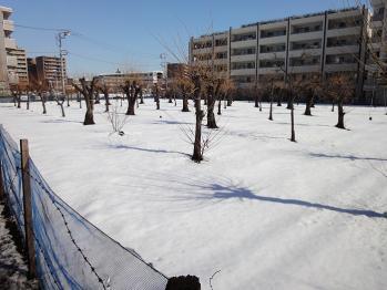 農園も雪で真っ白でした。