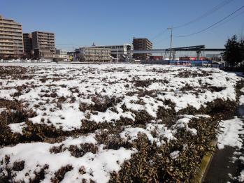 畑も真っ白です。