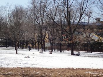 近くの公園です。雪だるまがありますね。