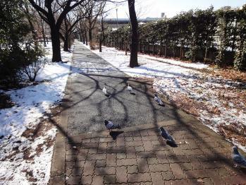 撮影してたら鳩の行列に遭遇しました。