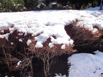 積もってる雪をアップで撮影しました。