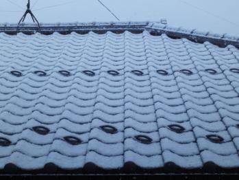 屋根にも積もりました。けど午後には止んでしまいました。