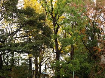 緑と黄と赤の葉が並んで美しいですね。