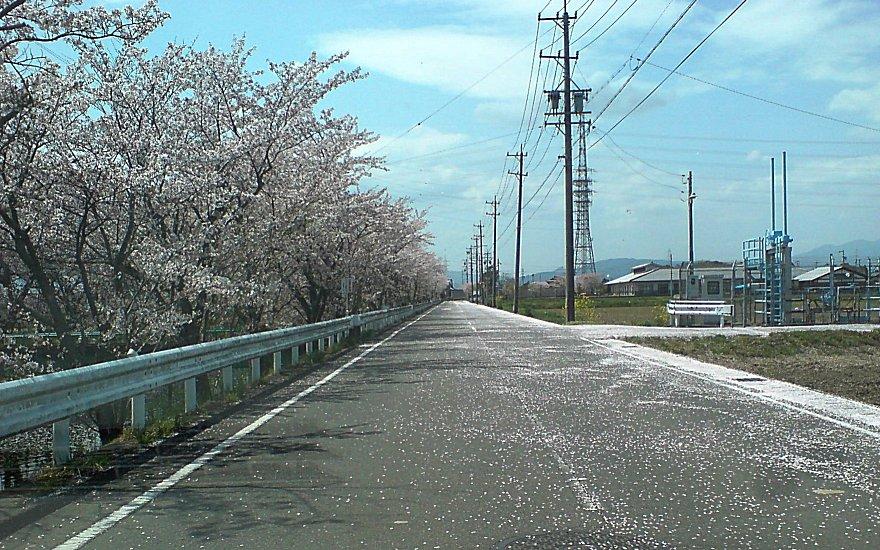 100410_sakurafubuki2.jpg