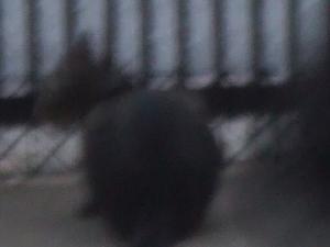車庫の門から外見16-5270_幅350