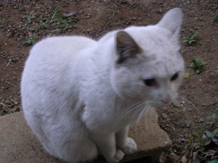 白猫 012