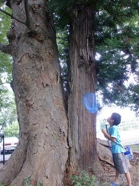 神社の木。