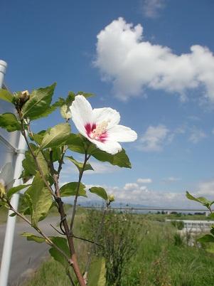 夏空と花。