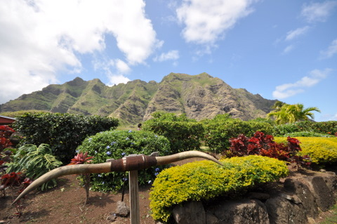 DSC_Hawaii_HNL_0043.jpg