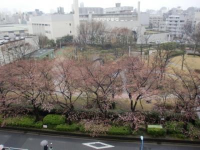 100325sakura2_convert_20100325193603.jpg