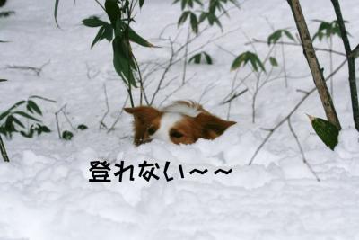 IMG_5263_sh01.jpg