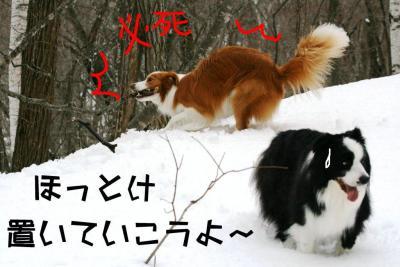 IMG_5277_sh01.jpg