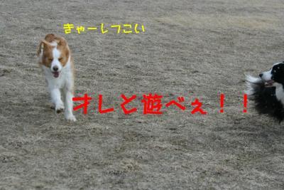 IMG_5762_sh01.jpg