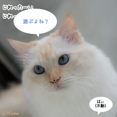 20111011_5.jpg