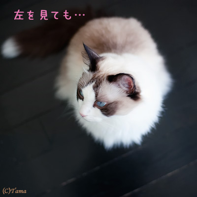 20111101_2.jpg