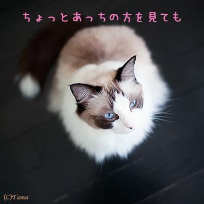 20111101_3.jpg