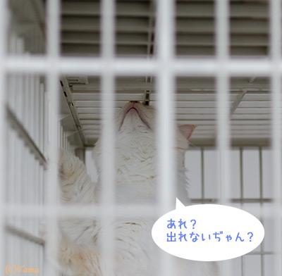 20111111_1.jpg