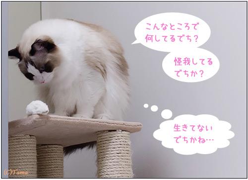 20111115_comic1.jpg