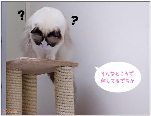 20111115_comic4.jpg