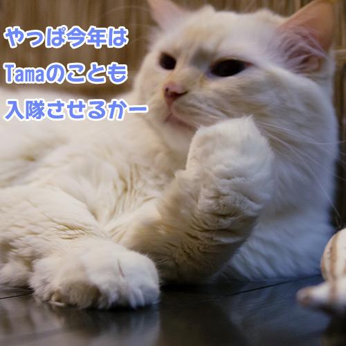 20130107_4.jpg