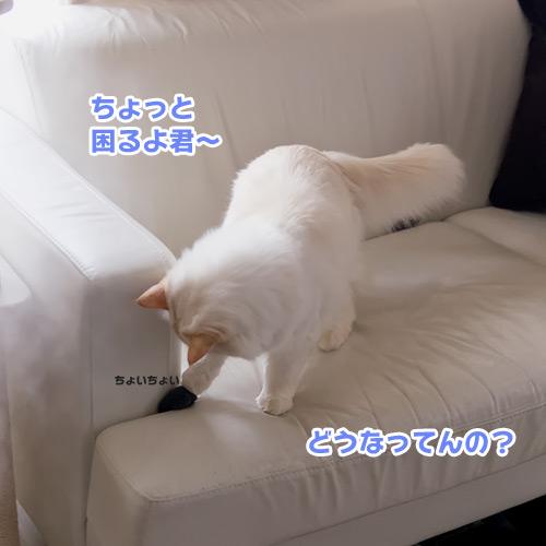 20130220_5.jpg