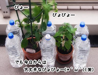 20130705_1.jpg