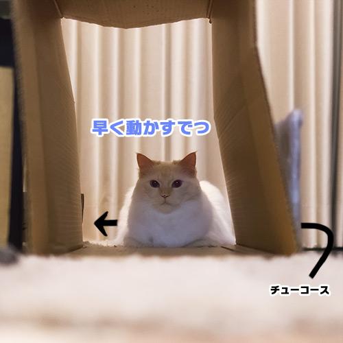 20130802_1.jpg
