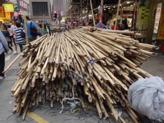 竹 たくさん