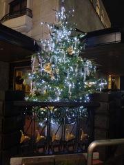 光のモミの木2
