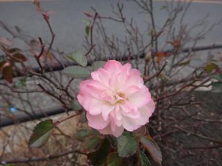 お花20120227