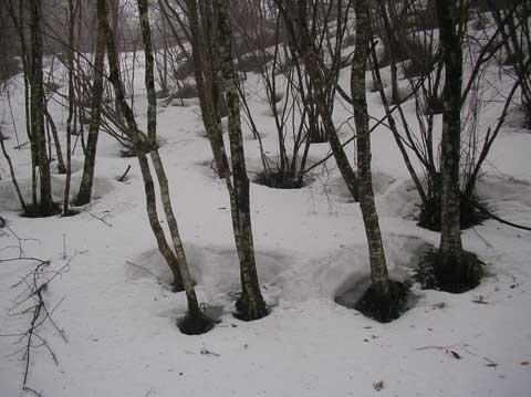 1-2006-03-19-07-49-480-024.jpg