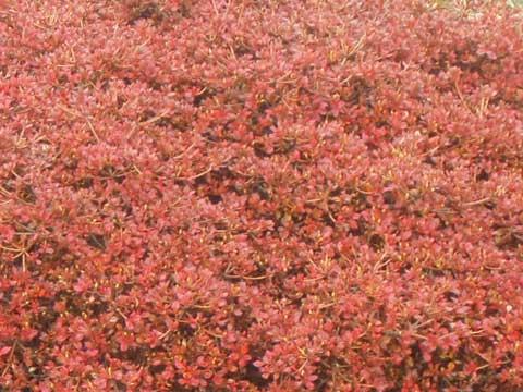 2-2008-10-26-koyo_0058.jpg