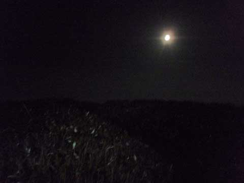 2-2009-10-04-0031-night.jpg
