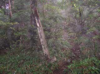 2006-09-16-13-40-320_056.jpg