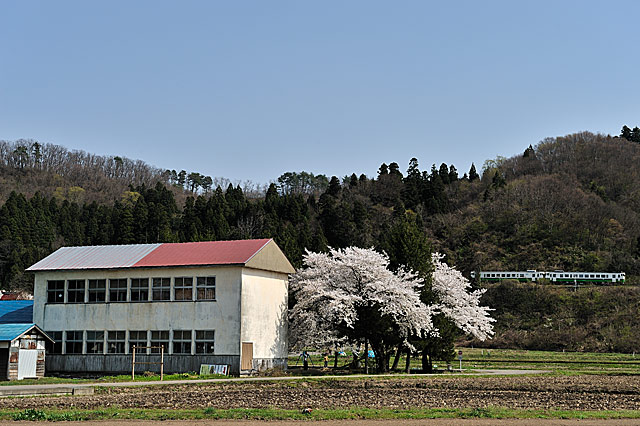 sakamotosakura