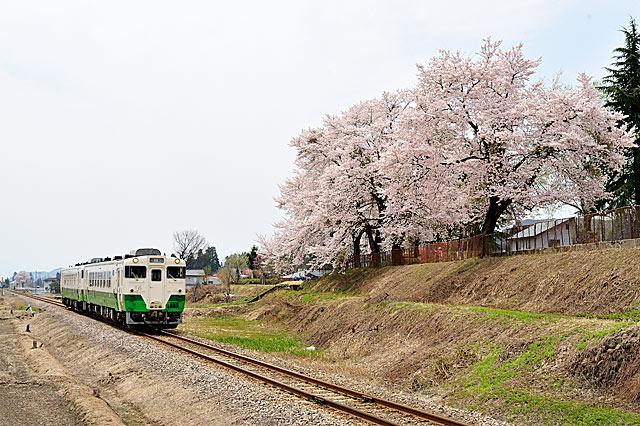 tanakasakura
