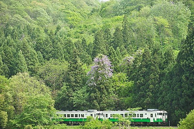 sakamotofuji