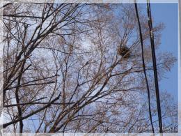 130315-1黒い巣