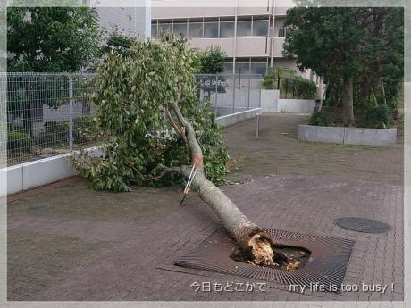 131017-1台風