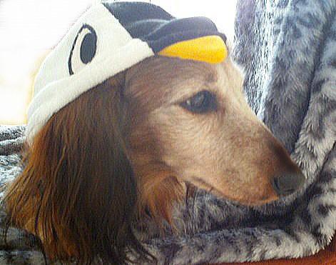 チャタペンギンさん