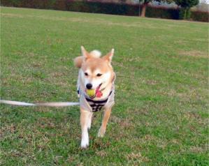 2010-11-14_1186.jpg