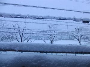 2011-01-17_001.jpg