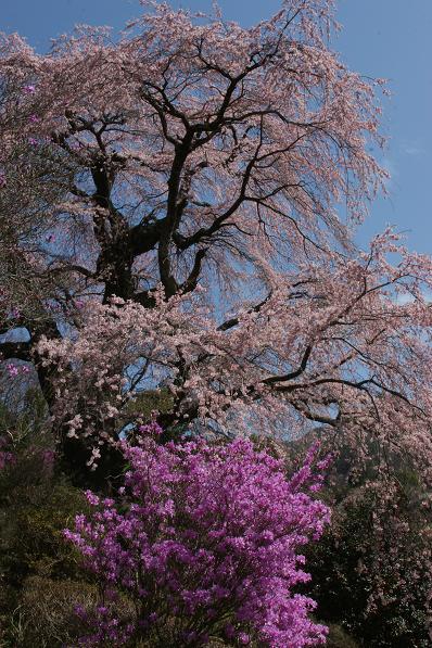 中川村美里地区の「春」