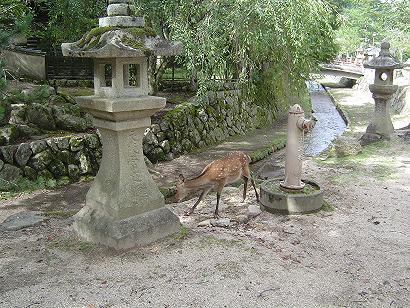 kizu2