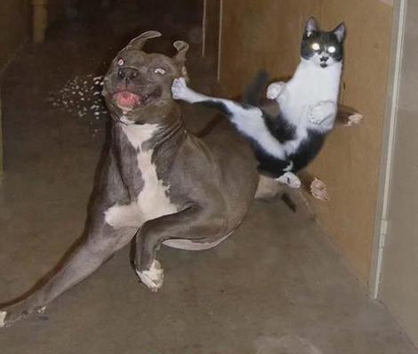 animal-battles14.jpg