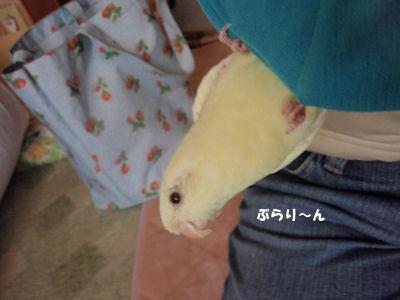 20100403raika.jpg