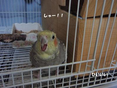 20100403subi2.jpg