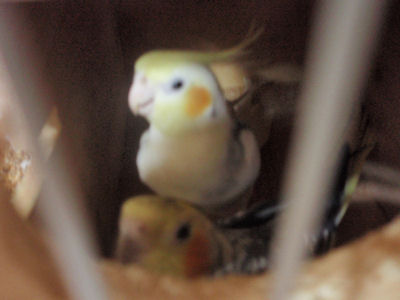 20100403subi3.jpg