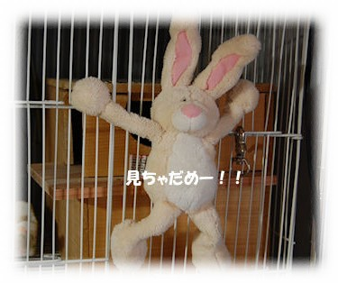 20100415nui.jpg